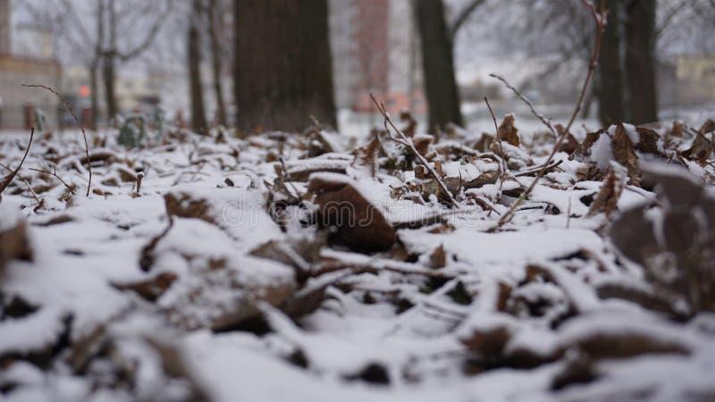 El invierno vino La primera nieve cayó foto de archivo
