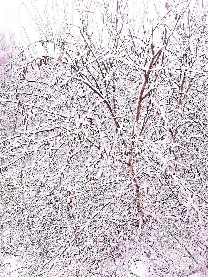 El invierno vino, la primera nieve cayó en el primer día de diciembre imágenes de archivo libres de regalías