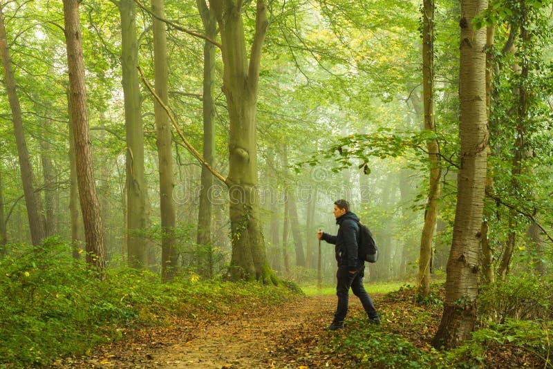 El ir de excursión en bosque foto de archivo libre de regalías