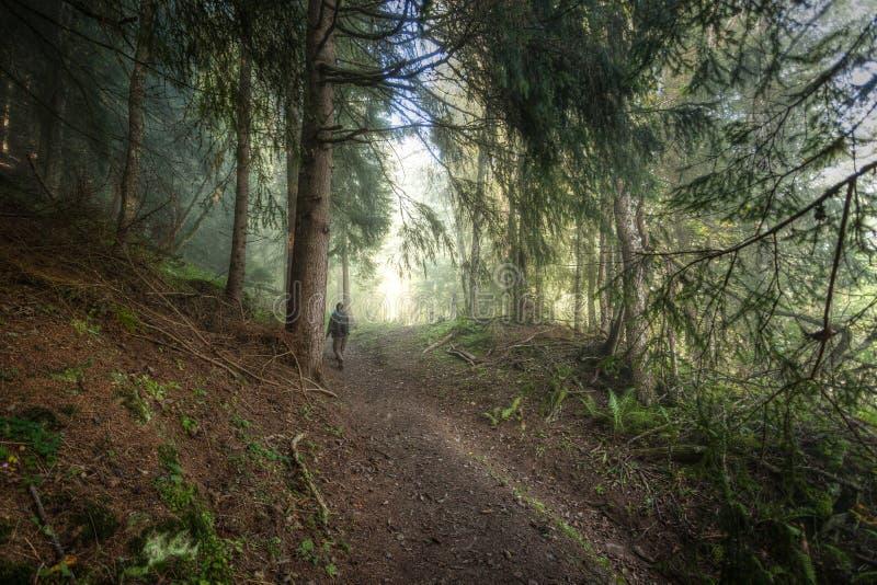 El ir de excursión en bosque imágenes de archivo libres de regalías