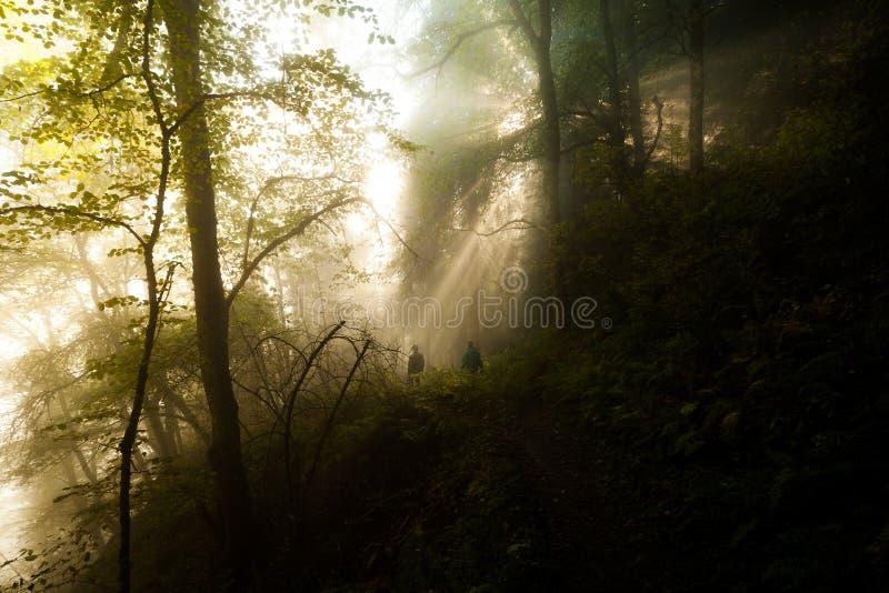 El ir de excursión en bosque fotos de archivo libres de regalías