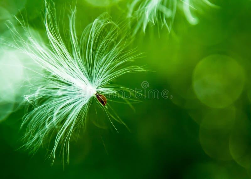 El ir volando y esté libre como el viento salvaje fotografía de archivo