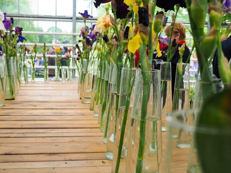 El iris abigarrado florece en flores de los floreros, violeta y amarillo del iris en un florero imágenes de archivo libres de regalías
