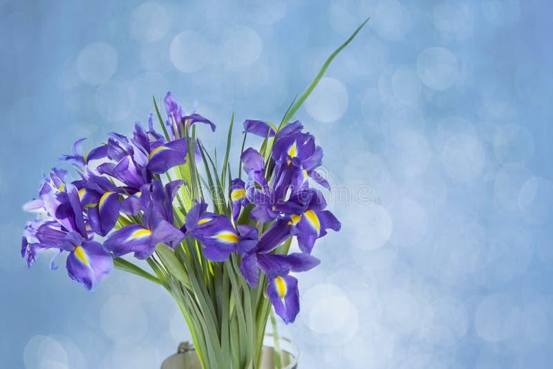 El iris con bulbo del xiphium de Violet Irises, sibirica del iris en el fondo blanco con el espacio para el texto Visión superior imagen de archivo
