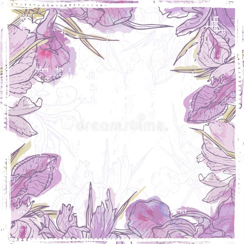 El iris retro dibujado mano de la acuarela florece el marco stock de ilustración