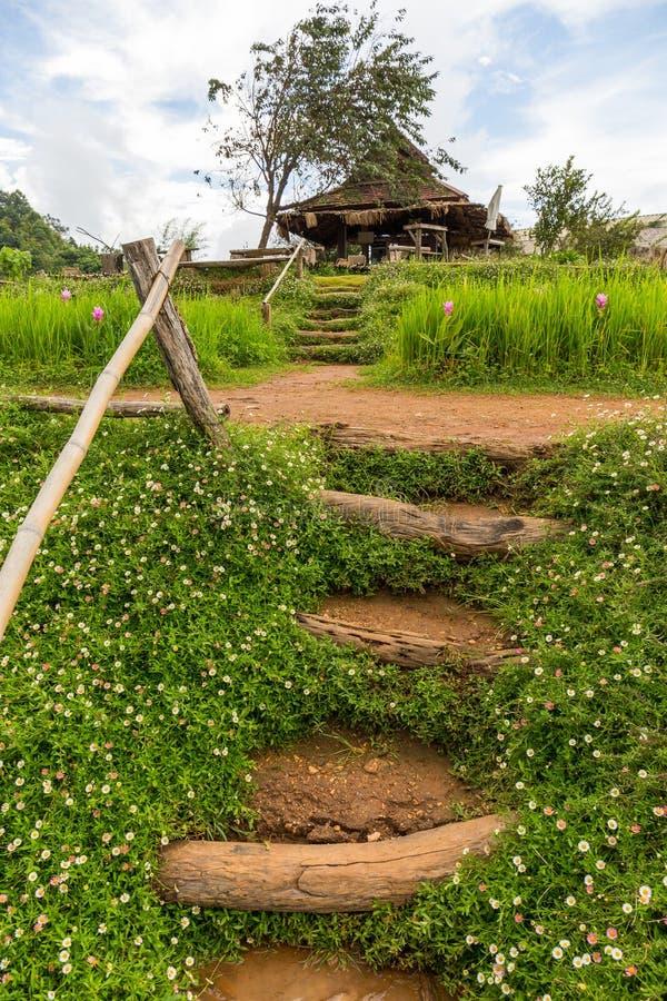 El jardín de flores de la montaña de lunes Chaem en Chiang Mai, Tailandia fotografía de archivo libre de regalías
