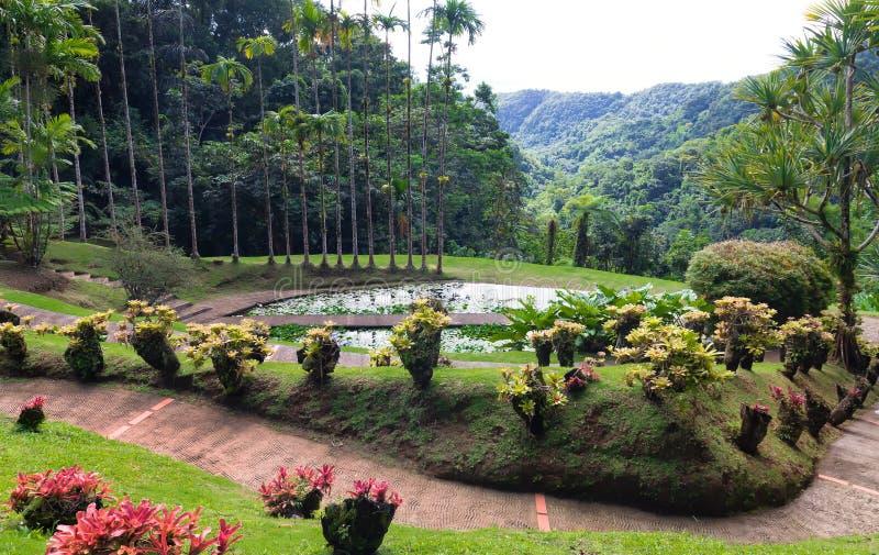 El jardín de la balata, isla de Martinica, francés las Antillas fotografía de archivo libre de regalías