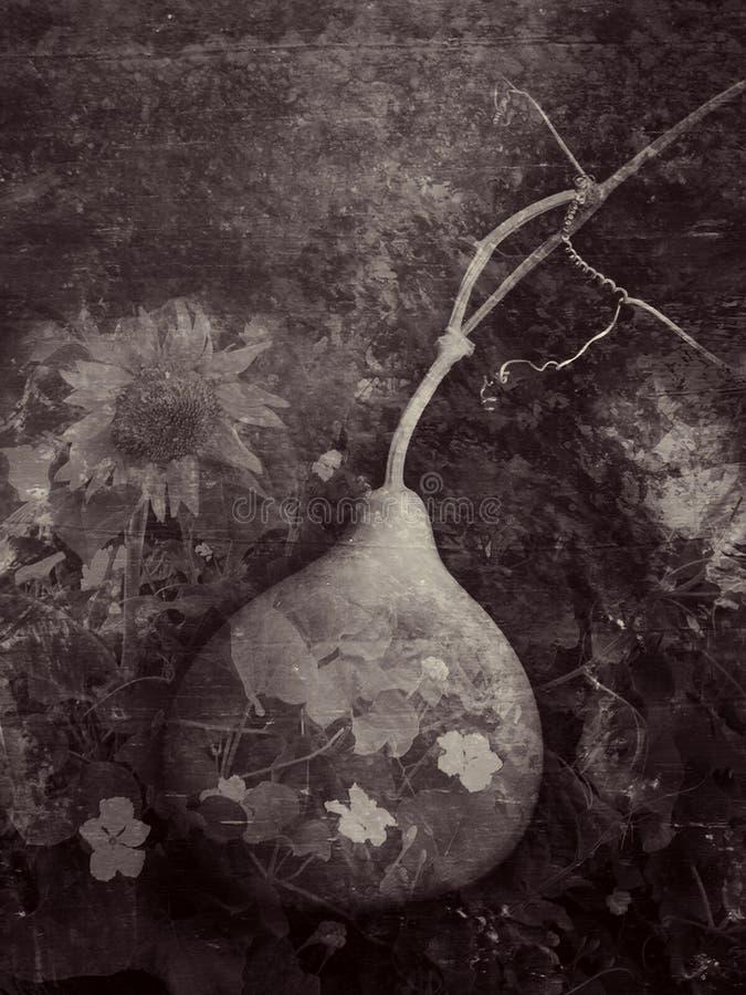 El jardín de la calabaza imagen de archivo