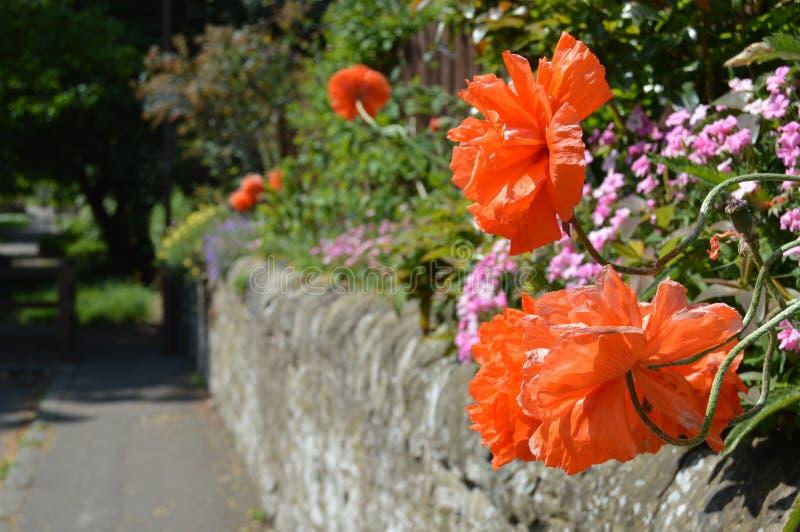 El jardín de la pared fotos de archivo