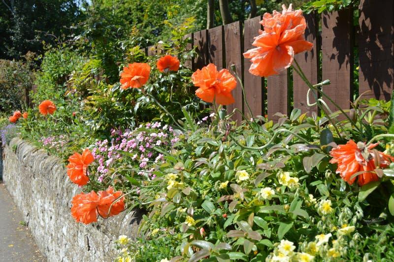 El jardín 2 de la pared fotografía de archivo libre de regalías