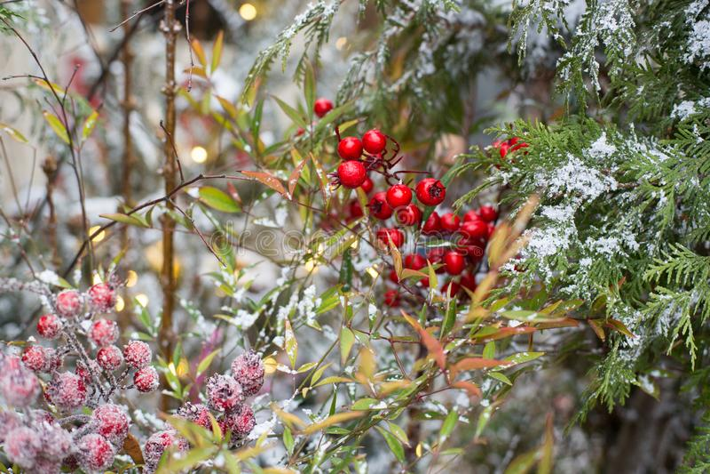 El jardín de Navidad está decorado con imágenes de archivo libres de regalías