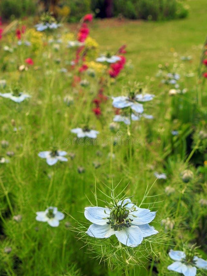 El jard?n ingl?s del prado del pa?s florece las plantas victorian de la primavera del verano fotos de archivo