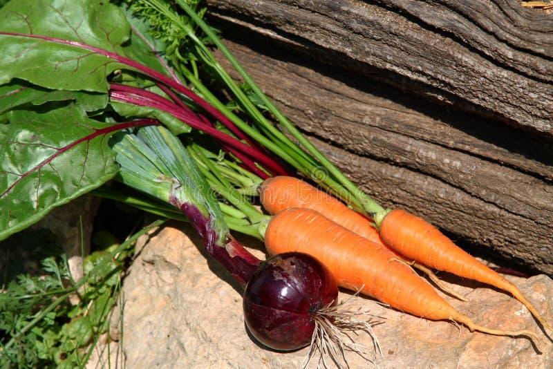 El jardín orgánico fresco cultivó verduras en una piedra imagen de archivo libre de regalías