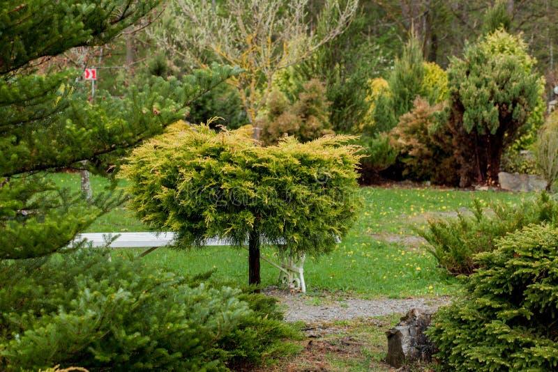 El jardín, el paisaje del arbusto geométrico de la forma y el arbusto adornan con la flor colorida que florece en verde fotos de archivo