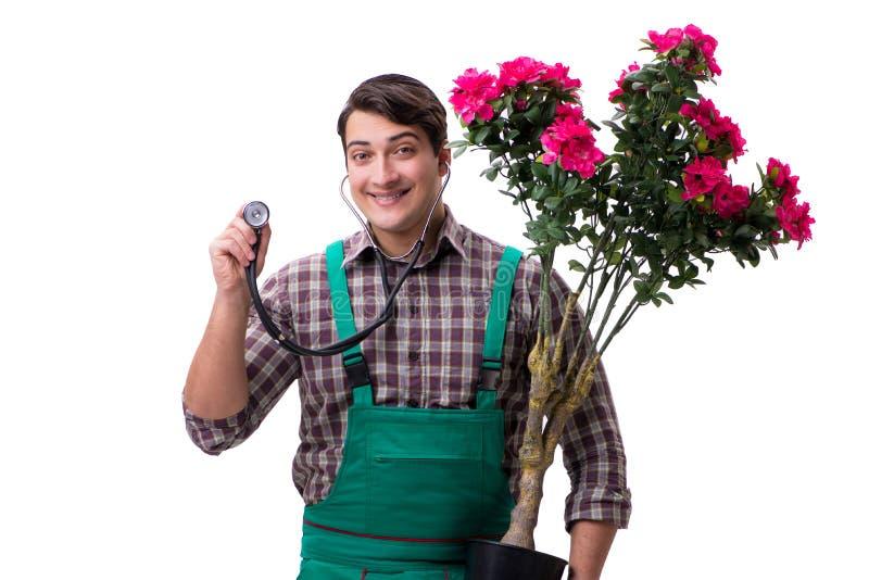 El jardinero del hombre joven aislado en blanco fotografía de archivo