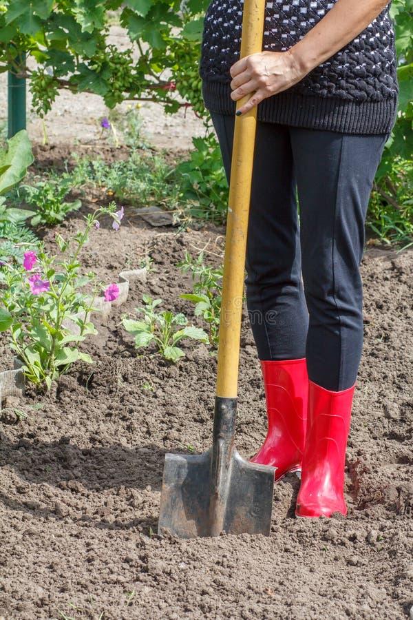El jardinero está cavando el suelo en una cama Empujes femeninos del granjero en un Garde fotos de archivo