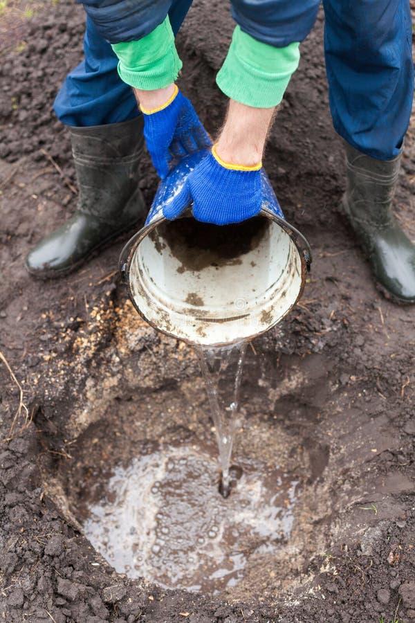 El jardinero prepara la tierra antes de plantar el arbusto en el suelo Vertiendo un agujero antes de plantar un arbusto de la bay fotos de archivo libres de regalías