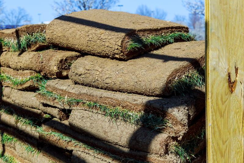El jardinero que aplica los rollos del césped en la hierba del patio trasero rueda listo para instalar foto de archivo