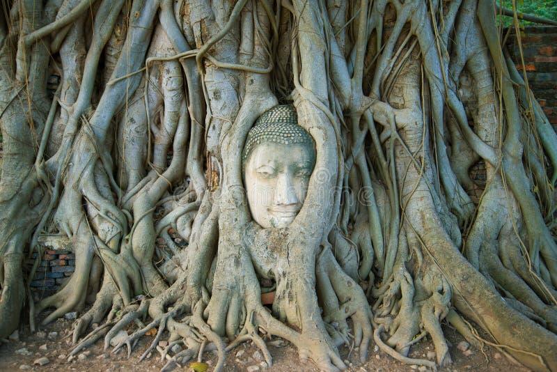 El jefe de la escultura antigua de Buda es crecido hacia dentro en las raíces del árbol Símbolo de la ciudad de Ayutthaya, Tailan fotos de archivo libres de regalías