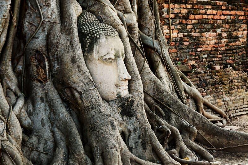 El jefe de la estatua de Buda con el árbol arraiga en Wat Mahathat, histo imágenes de archivo libres de regalías