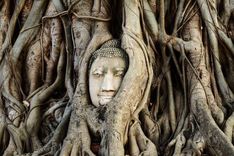 El jefe de la estatua de Buda con el árbol arraiga, sitio histórico de la provincia de Ayutthaya, Tailandia imagen de archivo libre de regalías