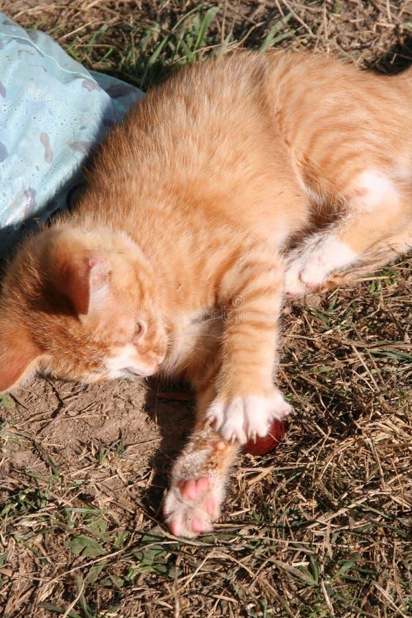 El jengibre del gatito llamó Tigger foto de archivo