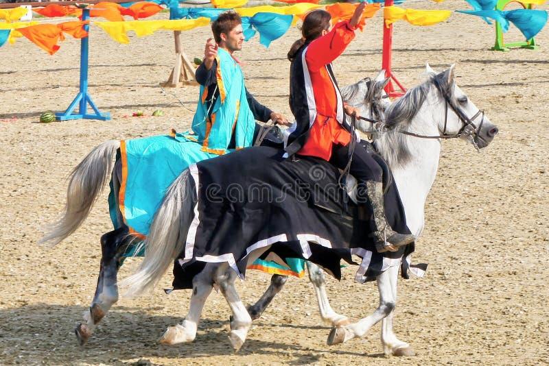 El joven knights equitación en caballos criados en línea pura imagen de archivo libre de regalías