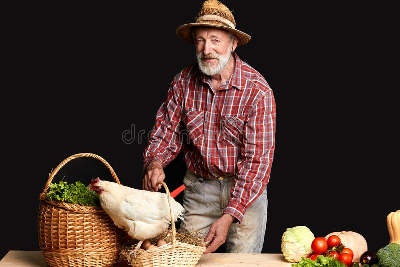 El jubilado masculino disfruta de forma de vida del campo, crece en verduras preferidas del invernadero fotos de archivo