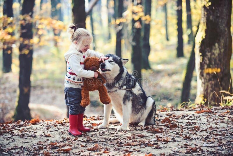 El juego de la muchacha con el perro esquimal y el peluche refieren el aire fresco al aire libre Muchacha con el perro en bosque  fotos de archivo libres de regalías