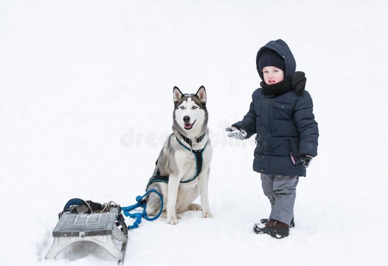 El juego del niño pequeño y del perro en nieve foto de archivo libre de regalías