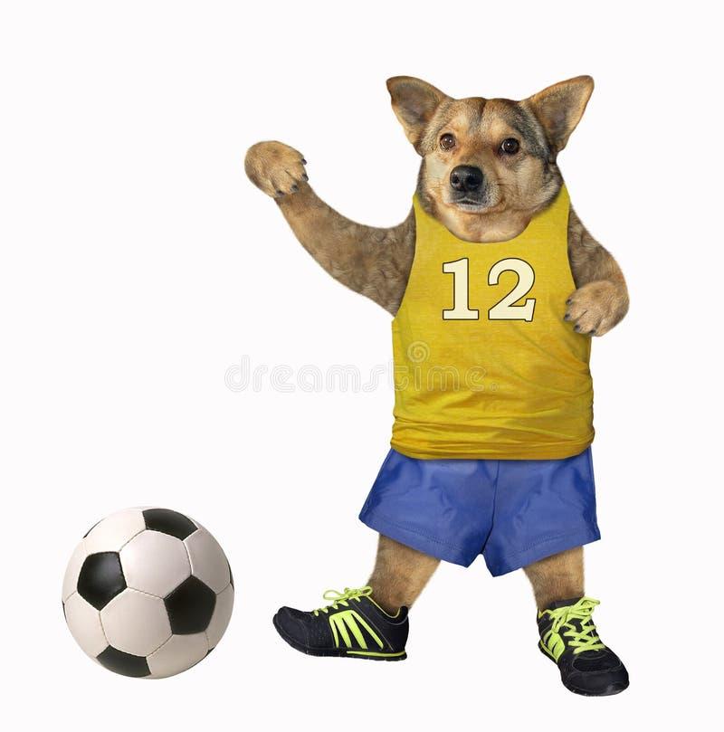El jugador de fútbol del perro golpea una bola 2 fotos de archivo