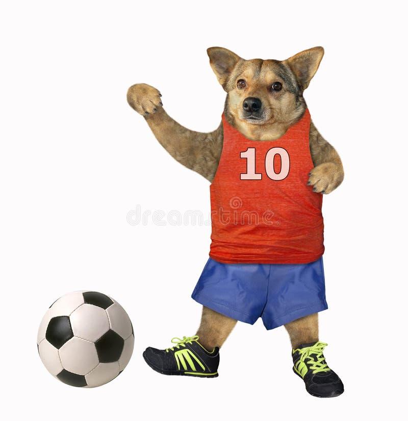 El jugador de fútbol del perro golpea una bola 3 foto de archivo libre de regalías