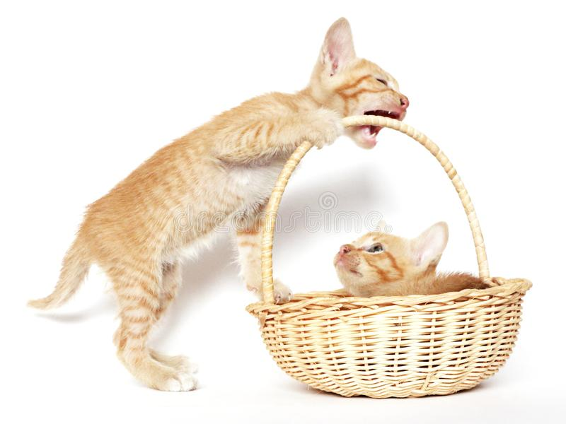 El jugar de los gatitos foto de archivo
