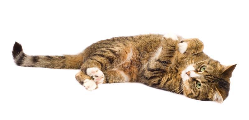 El jugar del gato aislado imagenes de archivo