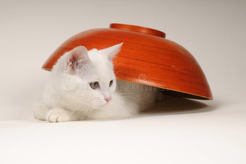 El jugar del gato del bebé foto de archivo