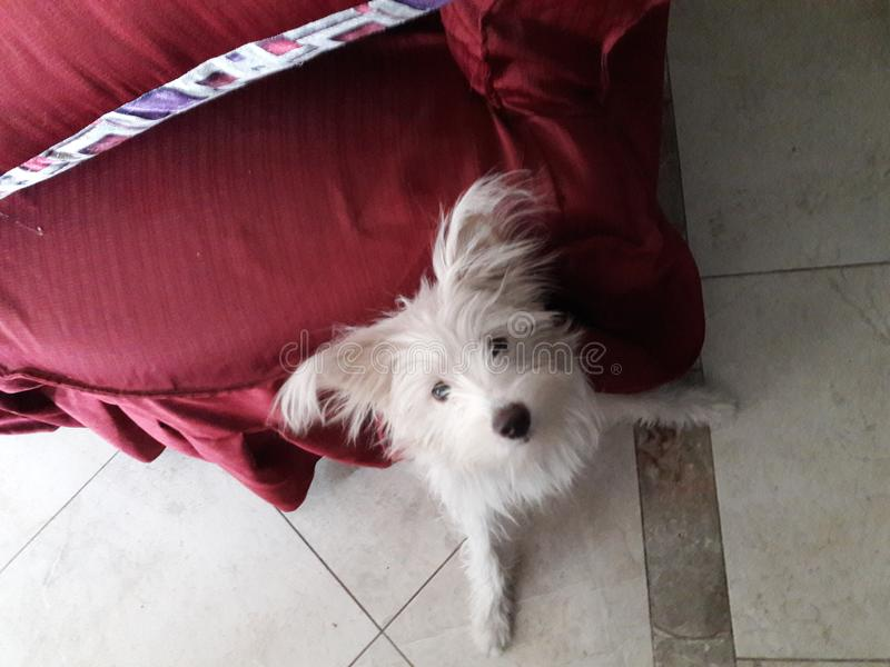 El jugar del perro feliz fotografía de archivo libre de regalías