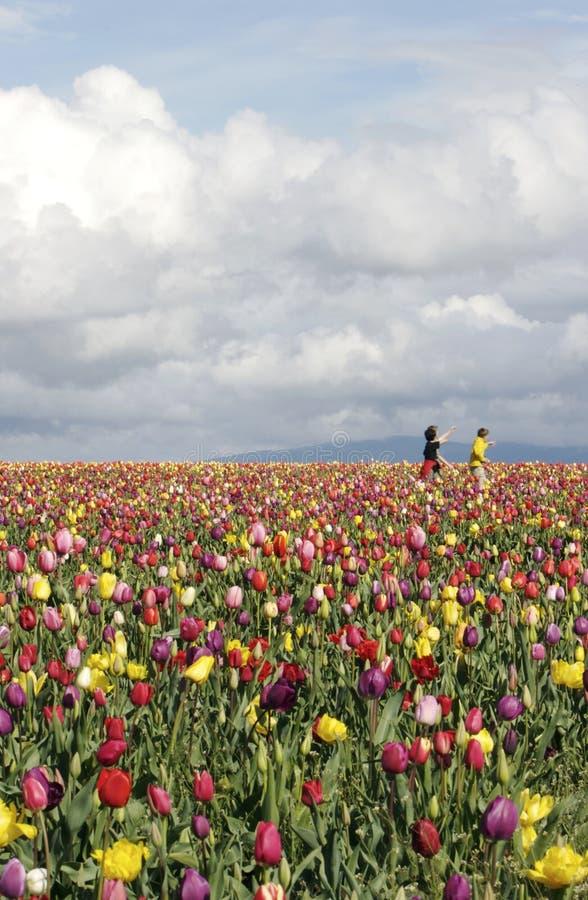 El jugar en campos del tulipán fotografía de archivo