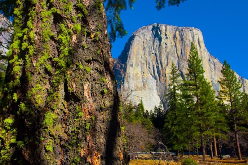 El kapitanu skała w Yosemite parku narodowym, Kalifornia obraz royalty free