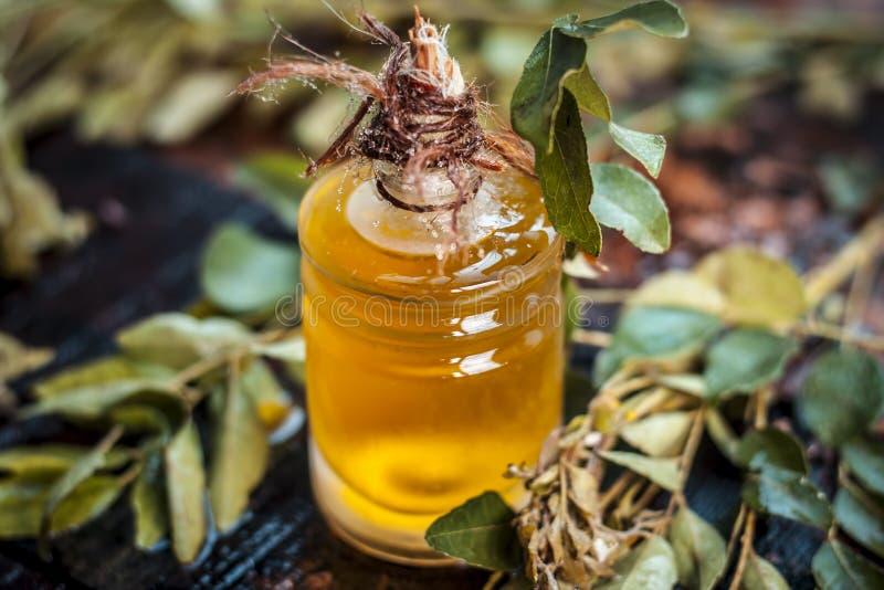 El koenigii de Murraya, curry se va con aceite extraído en una botella transparente imagen de archivo