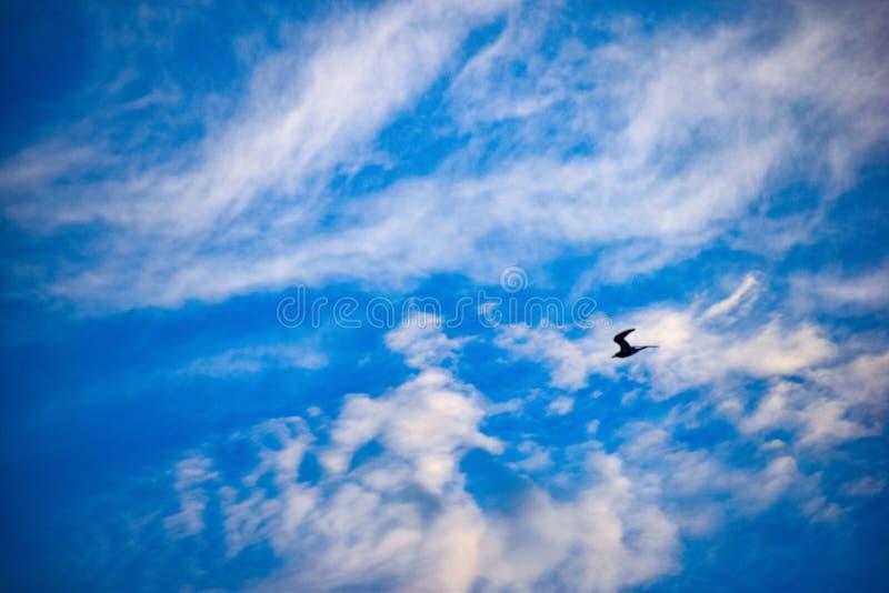 El límite del cielo imagen de archivo libre de regalías