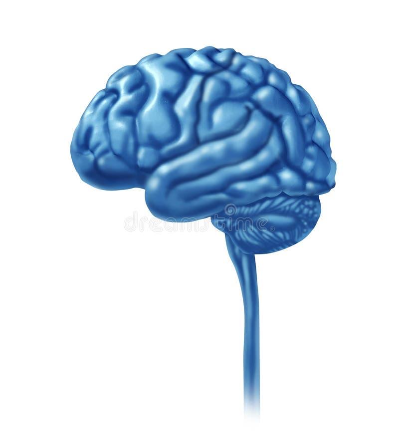 El lóbulo del cerebro secciona las divisiones de neurológico mental stock de ilustración