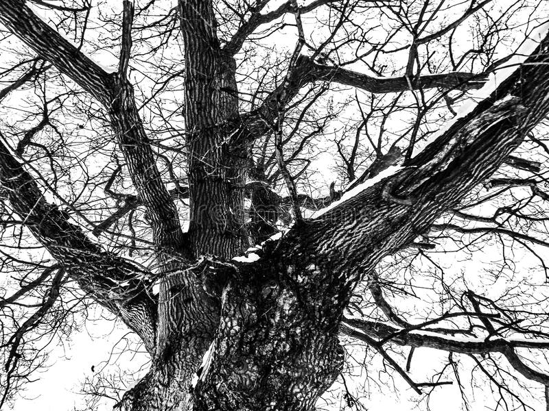 El lado oscuro del sueño fotografía de archivo libre de regalías