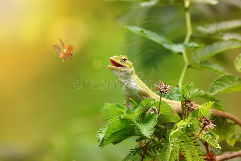 El lagarto del jardín fotos de archivo