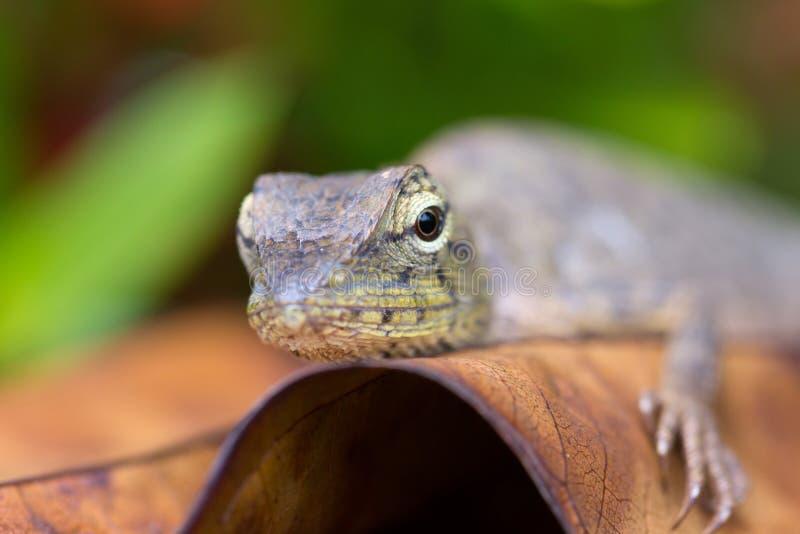 El lagarto se calienta bajo tarde Sun fotos de archivo