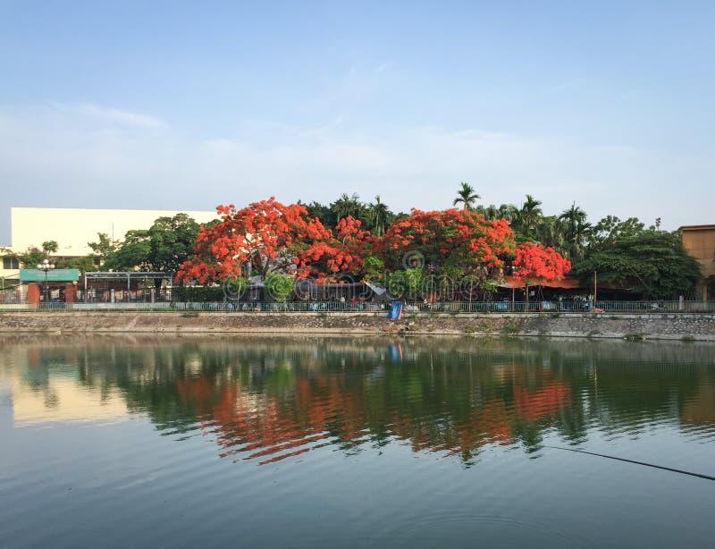El lago con muchos árboles llamativos en la ha de largo, Vietnam foto de archivo