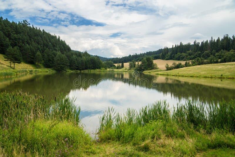 El lago llamó Zlatna rodeado con los prados y el bosque, Eslovaquia fotografía de archivo
