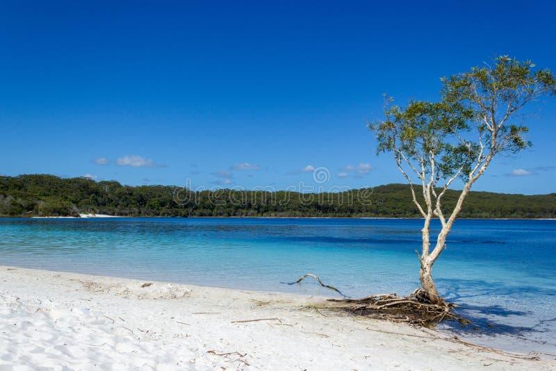 El lago Mackenzie en Fraser Island de la sol de Queensland es un lago de agua dulce hermoso popular entre los turistas que visita fotos de archivo