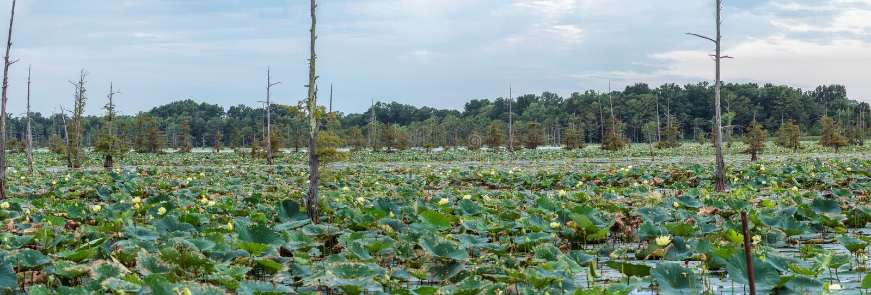 El lago negro bayou es un refugio del ` s del pescador fotografía de archivo libre de regalías