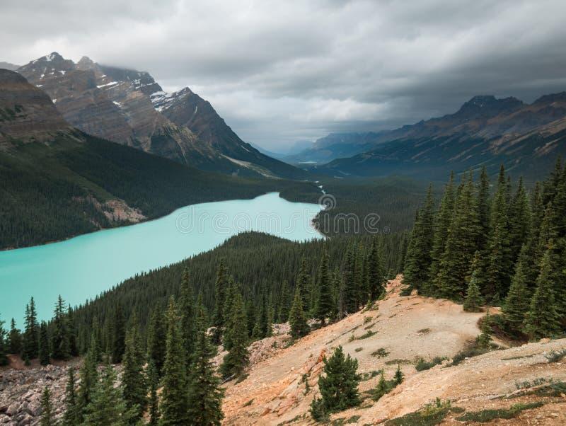 El lago Peyto en Banff Alberta parece la cara de un zorro fotos de archivo