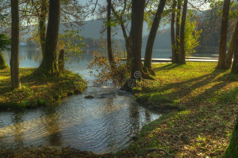 El lago sangró y bosque - imagen del otoño, Eslovenia imagenes de archivo